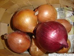 دانلود پاورپوینت Seminar of postgraduate course as title as ONION